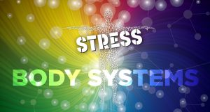 How Stress Affects Your Body Systems