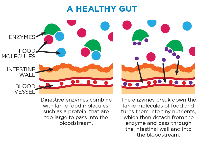A Healthy Gut
